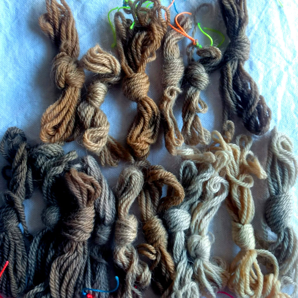 Muestras de lana oveja y alpaca teñidas con nogal