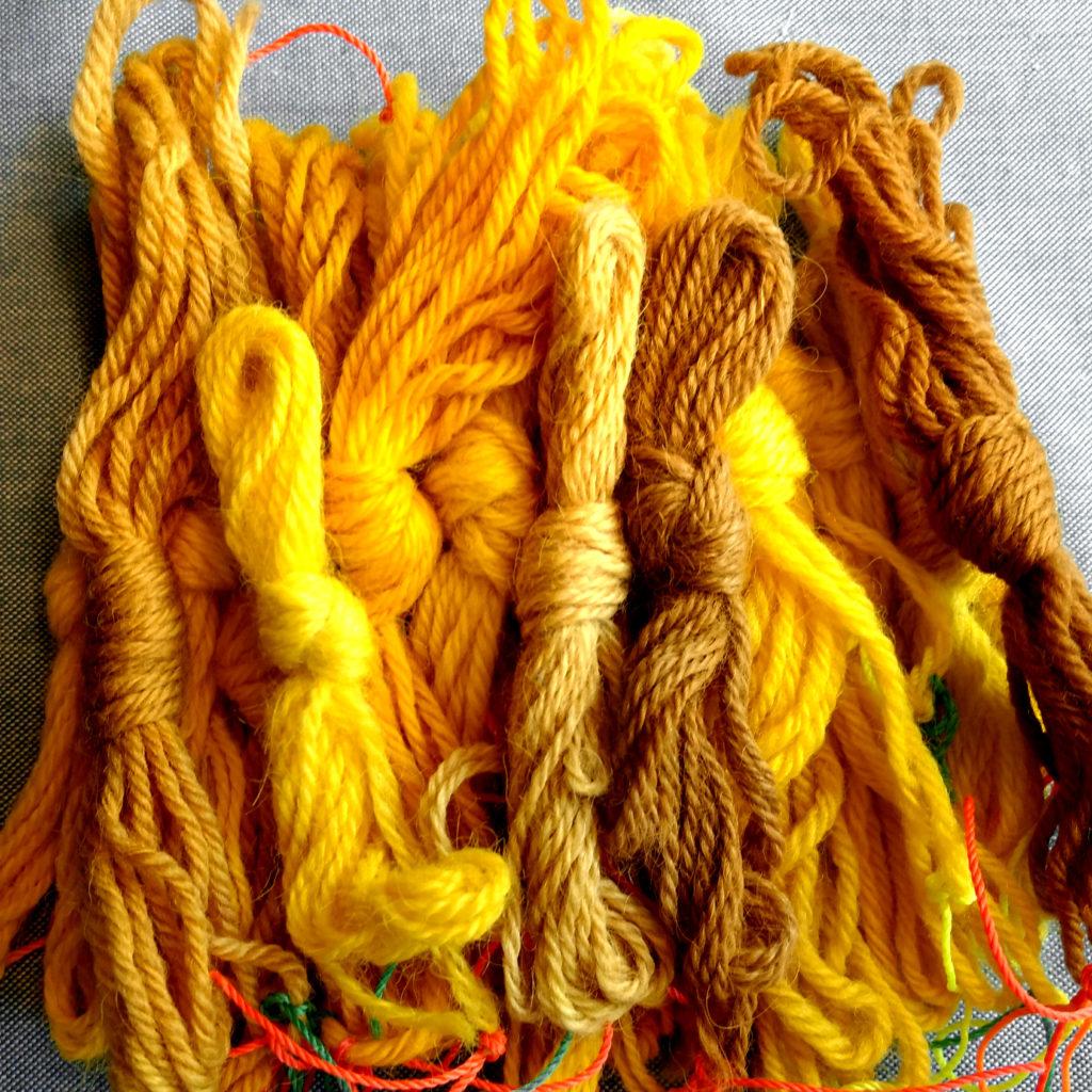 muestras de teñido con cúrcuma sobre lana y alpaca