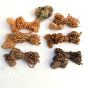 Muestras de lana cruda y vellón teñidas con líquenes
